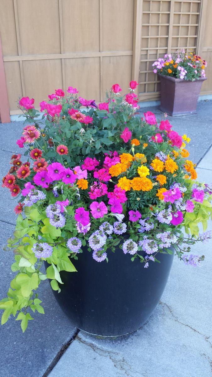 Flower Garden Design Installation Seasonal Color Maintenance