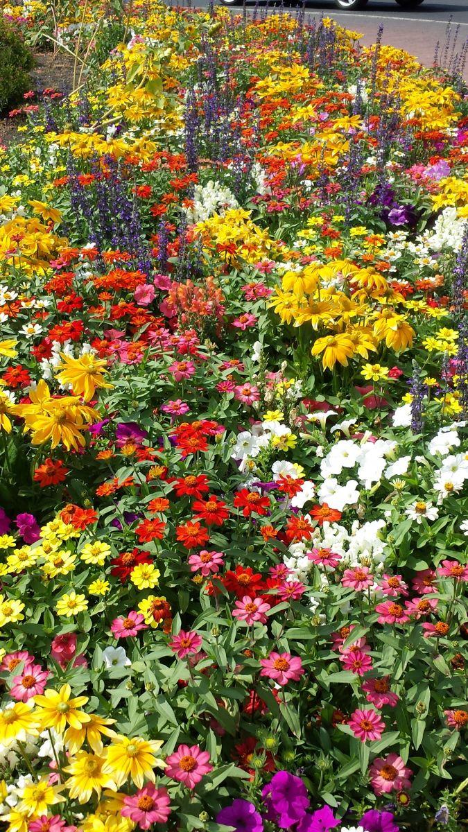 flower garden design & installation | seasonal color ...